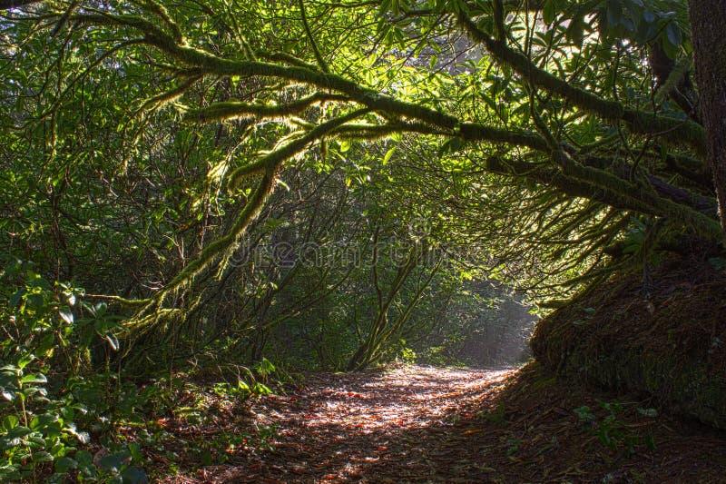 Download 树曲拱和阳光在美丽的足迹 库存图片. 图片 包括有 阳光, 高涨, 户外, 醉汉, 人们, 线索, 照片 - 30328461