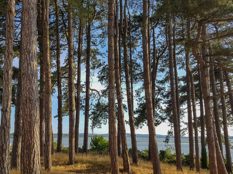 树有海视图 免版税库存图片