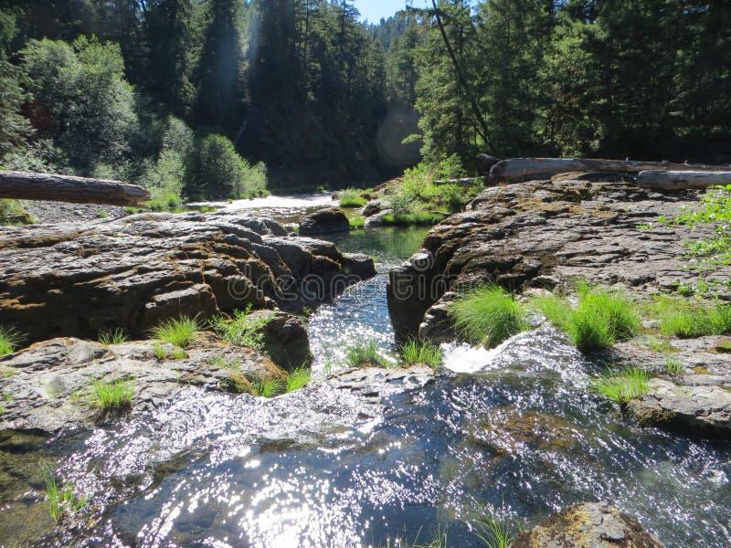 树木丛生的小河 库存照片
