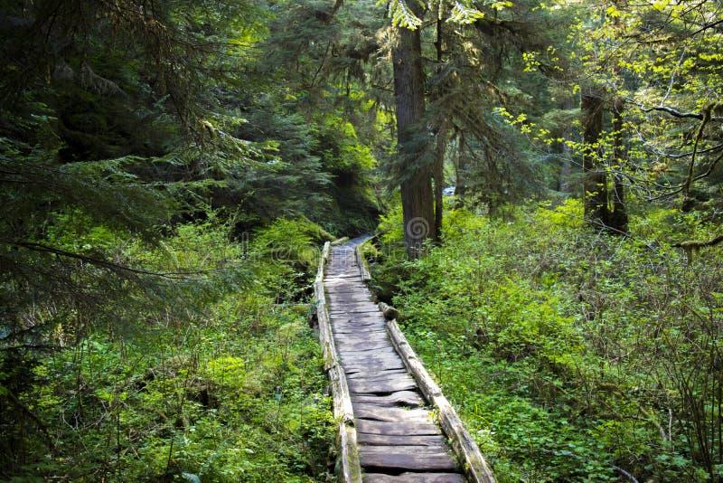 树木丛生的湖22 免版税库存照片
