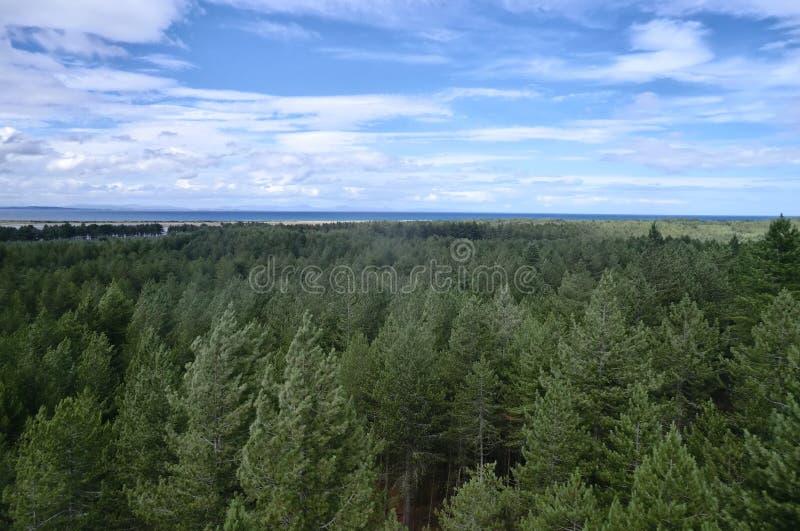 树木天棚从上面 免版税库存图片