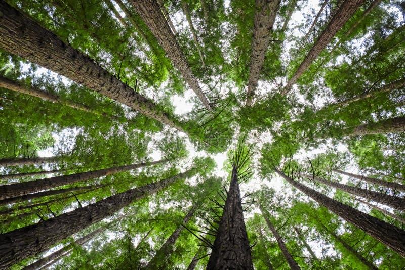 树木天棚 图库摄影