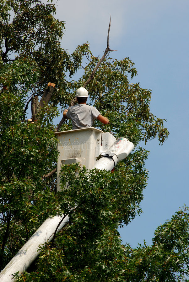 树木栽培家结构树修整 免版税库存照片