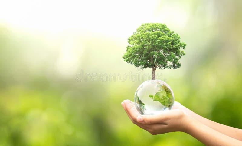 树木生长绿色自然模糊背景的手持玻璃球 生态概念 免版税库存图片