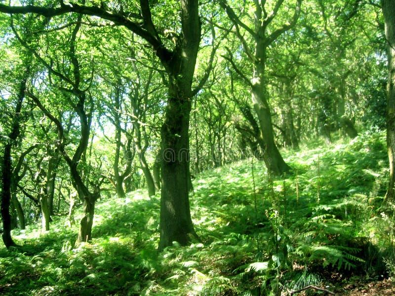 树木繁茂的山坡 免版税库存照片