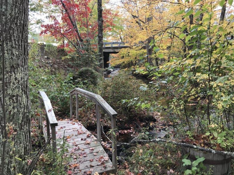 树木繁茂的桥梁 库存照片