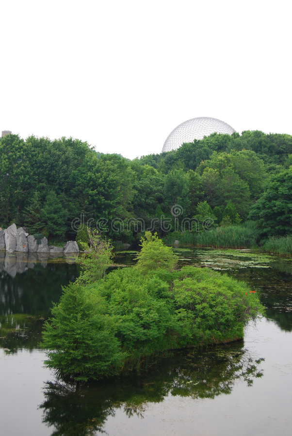 树木繁茂的池塘在公园 免版税库存照片