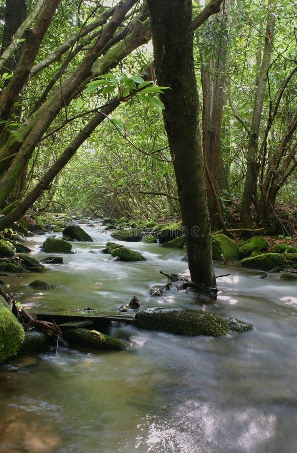 树木繁茂的流 免版税库存照片