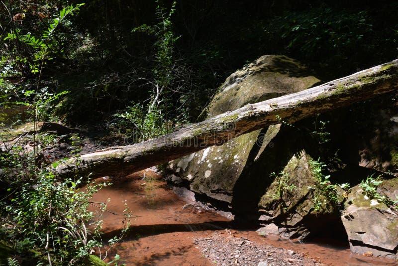 树木繁茂的流 图库摄影
