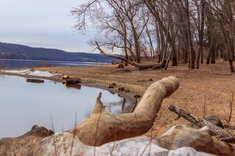 树木繁茂的海滩 免版税库存图片