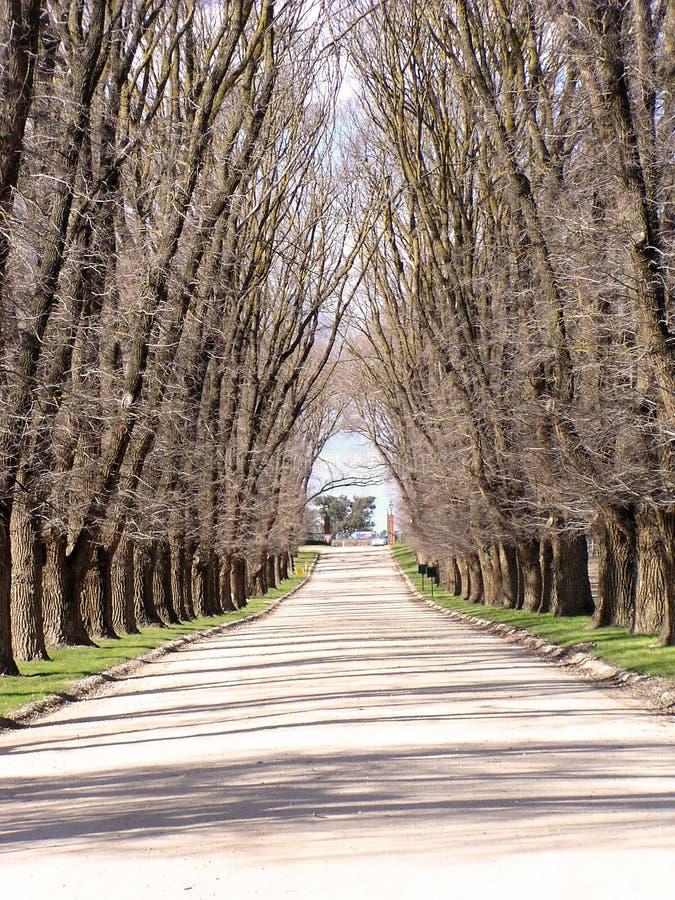 树木繁茂的路径