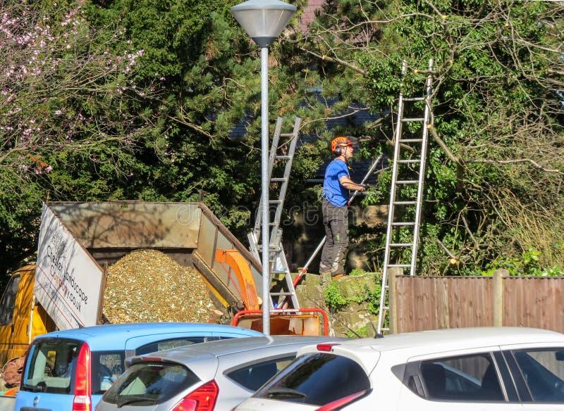 树木整形专家修剪在停车场分支 免版税库存照片