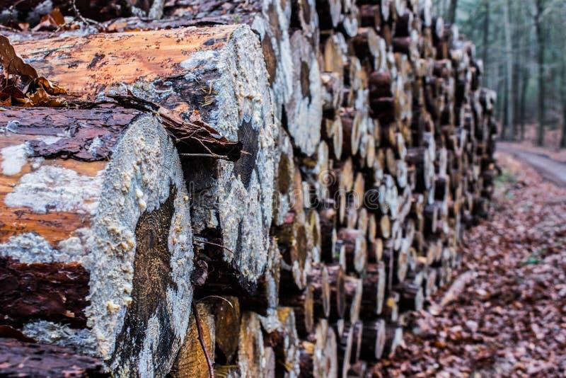 树木头新近地切开了 免版税图库摄影