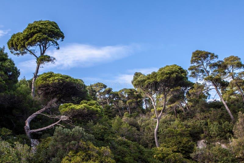 树本质上 免版税库存图片