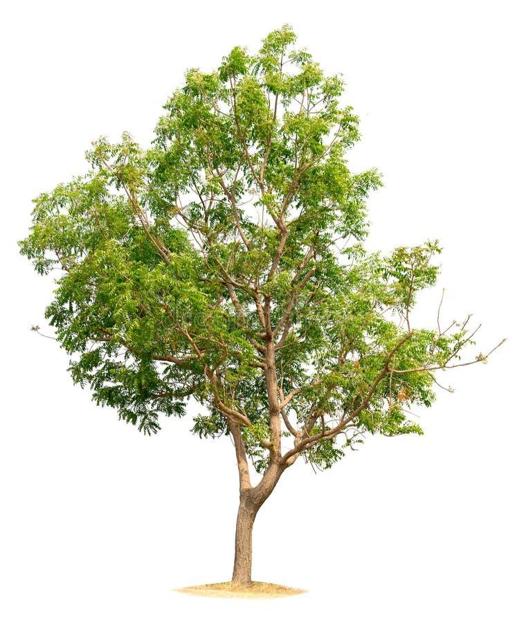 树本质的隔绝 免版税库存图片