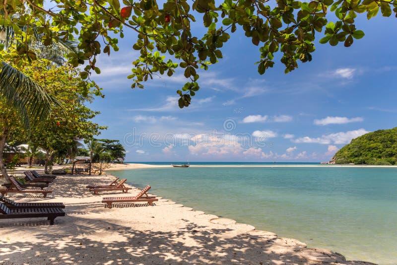 树构筑的热带海滩 免版税库存照片