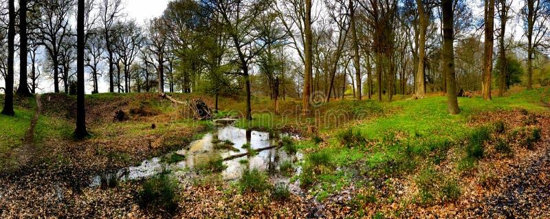 树林中池塘的全景 库存照片