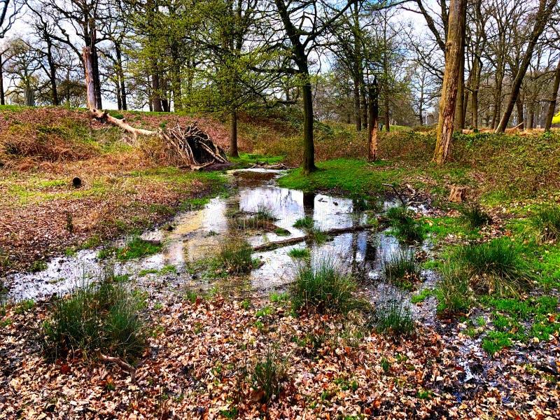 树林里的池塘 免版税库存图片