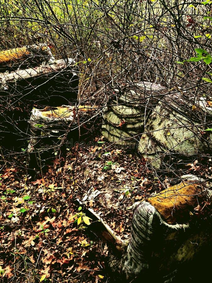 树林里的沙发 免版税库存图片