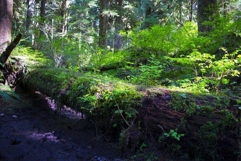 绿树林 免版税图库摄影