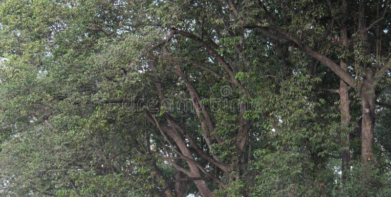 树枝交错,形成连续的植物生长的背景 免版税库存图片