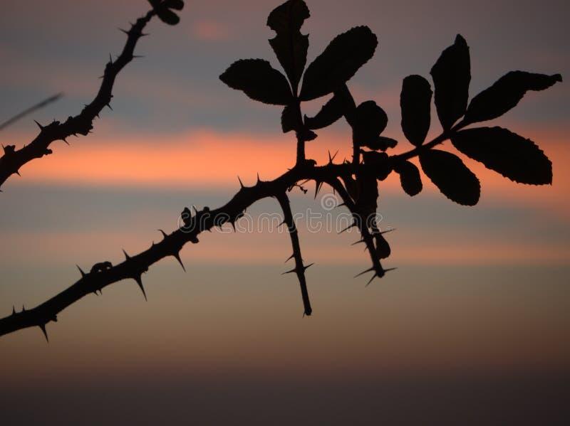树枝剪影有日出的 库存图片