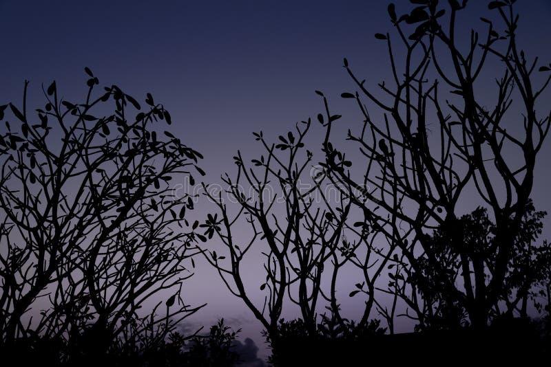 树枝剪影 免版税图库摄影