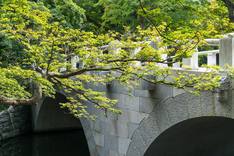 树枝和寺庙桥梁 库存图片
