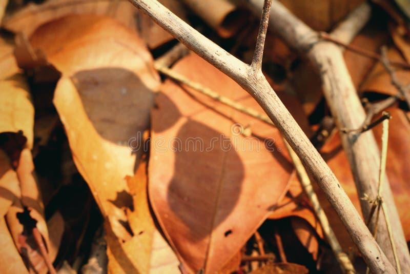 树枝和阴影 免版税库存图片