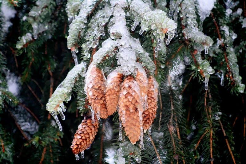 树枝完全地冻结,在意大利冬天山期间 免版税库存照片
