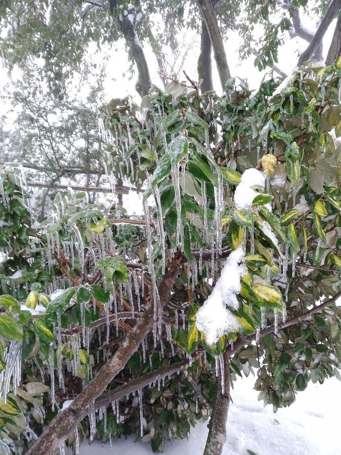 树枝完全地冻结,在高山的意大利冬天期间 免版税库存图片
