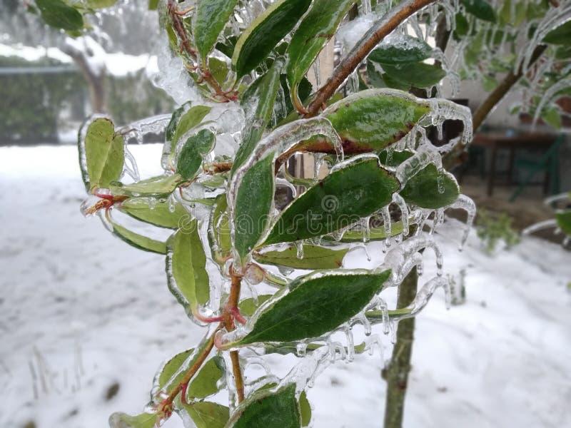 树枝完全地冻结,在高山的意大利冬天期间 库存照片