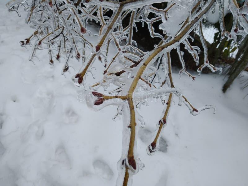 树枝完全地冻结,在高山的意大利冬天期间 免版税库存照片