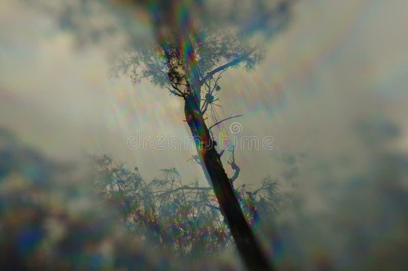树枝棱镜畸变 库存照片