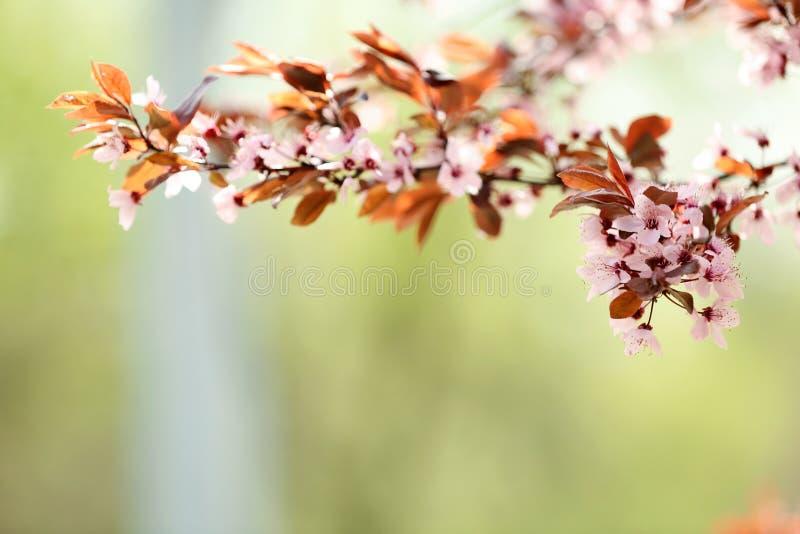 树枝特写镜头视图与户外微小的花的 r 免版税库存图片