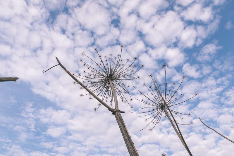 树枝的关闭在秋天和自然细节提取-葡萄酒减速火箭的神色 库存图片