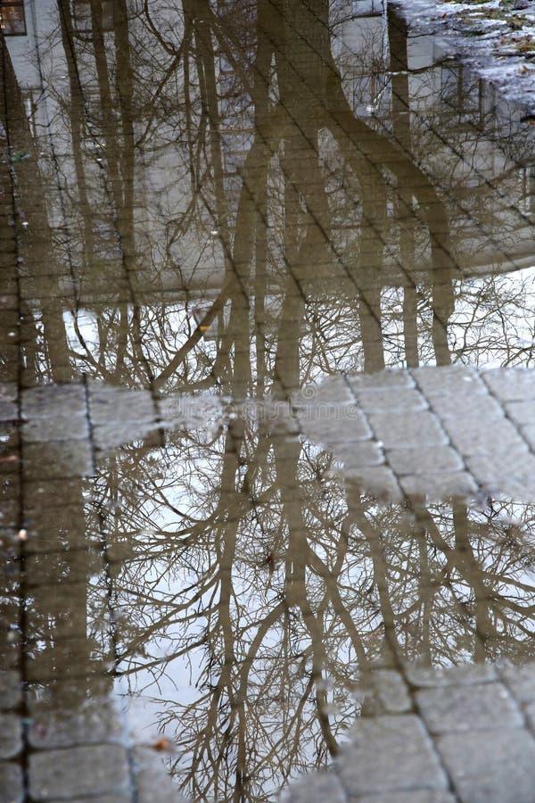 树枝的反射在水坑的 免版税库存图片