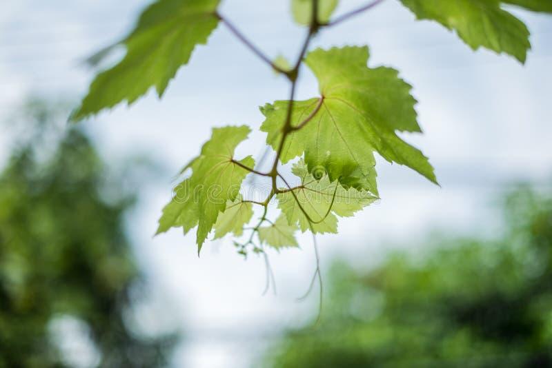 树枝 图库摄影