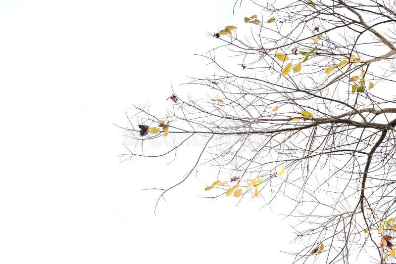 树枝 库存照片