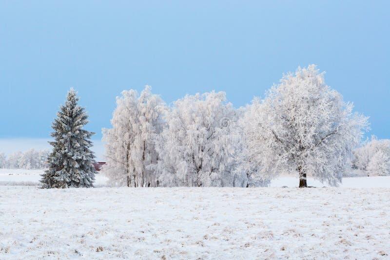 树树丛在冬天 图库摄影