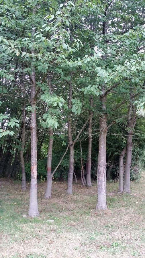树树丛 免版税库存图片