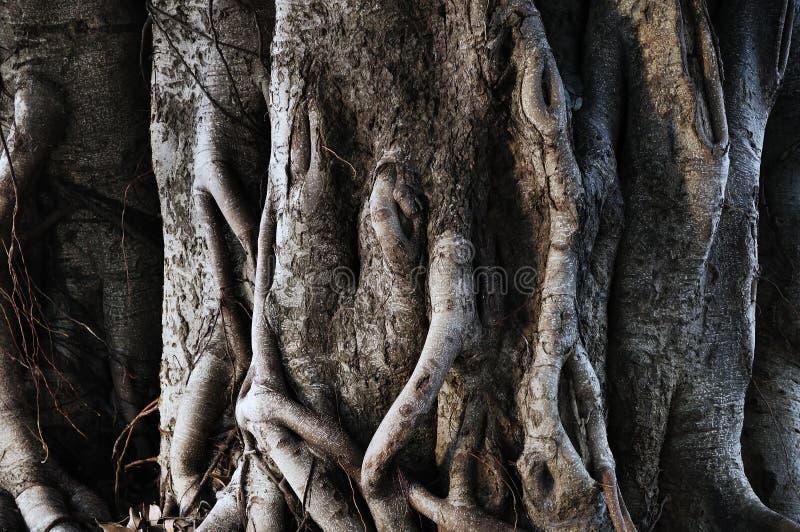 树树干  图库摄影