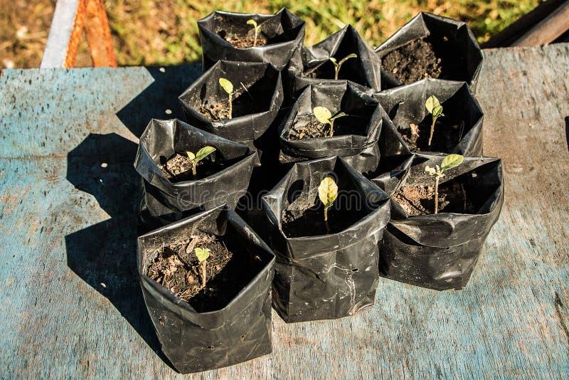 树树苗增长 库存图片