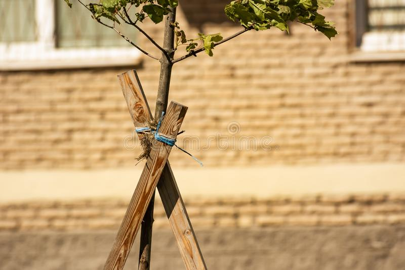 树栓与绳索对木板条对房子的墙壁 免版税库存照片