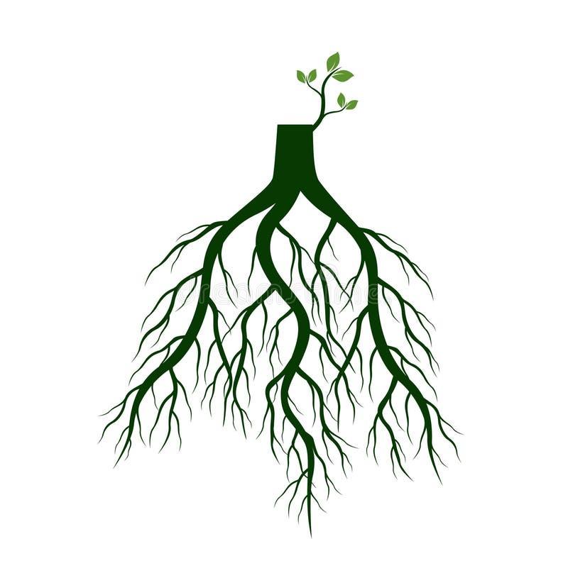 树根和发芽肢体 植物根  也corel凹道例证向量 库存例证