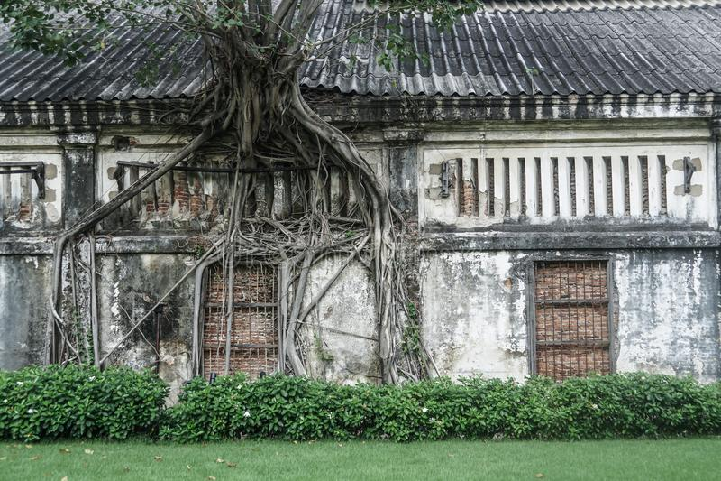 树根在老房子增长 免版税库存图片