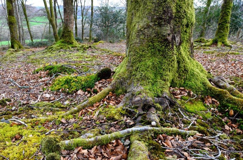 树根 库存照片