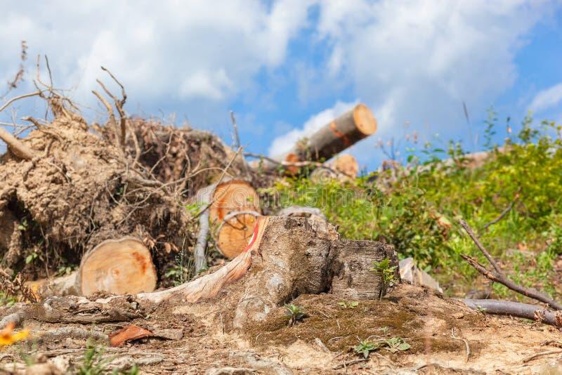 树桩和某一树注册山行迹的上面与天空蔚蓝和白色云彩的在背景中 图库摄影