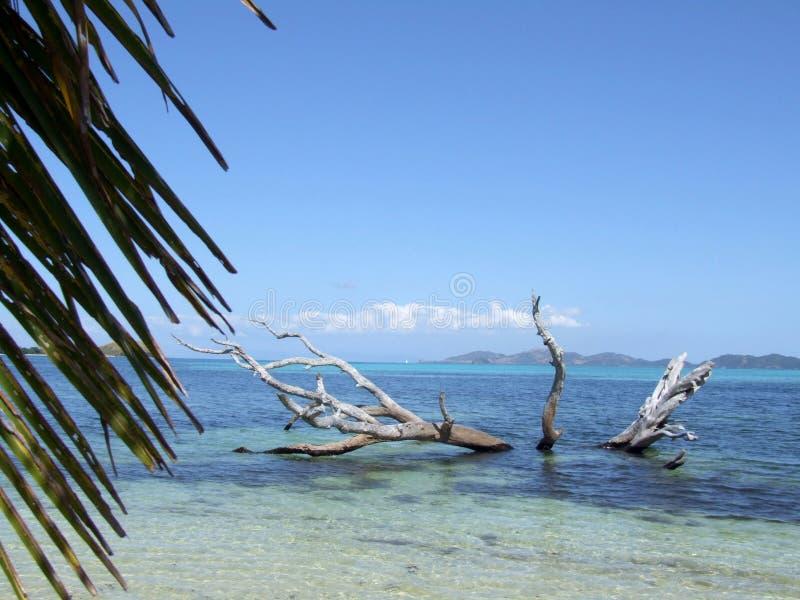 树桩在清楚的水中 免版税库存图片