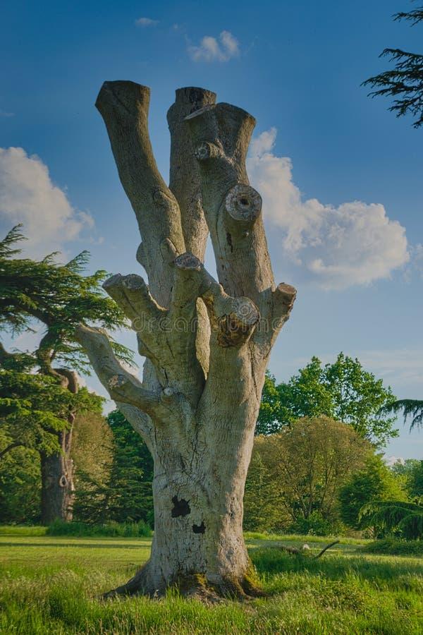 树桩在草甸 免版税图库摄影